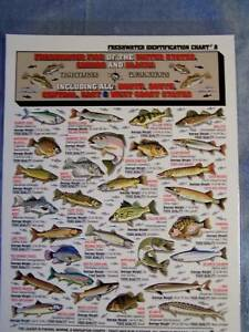 FRESHWATER-FISH-Identification-Chart-Tightlines-8