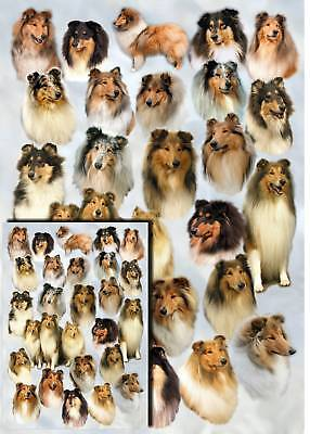 Rough Collie Dog Gift Wrapping Paper By Starprint