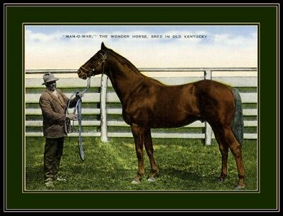 Kentucky Man-O-War Horse Art Picture Print