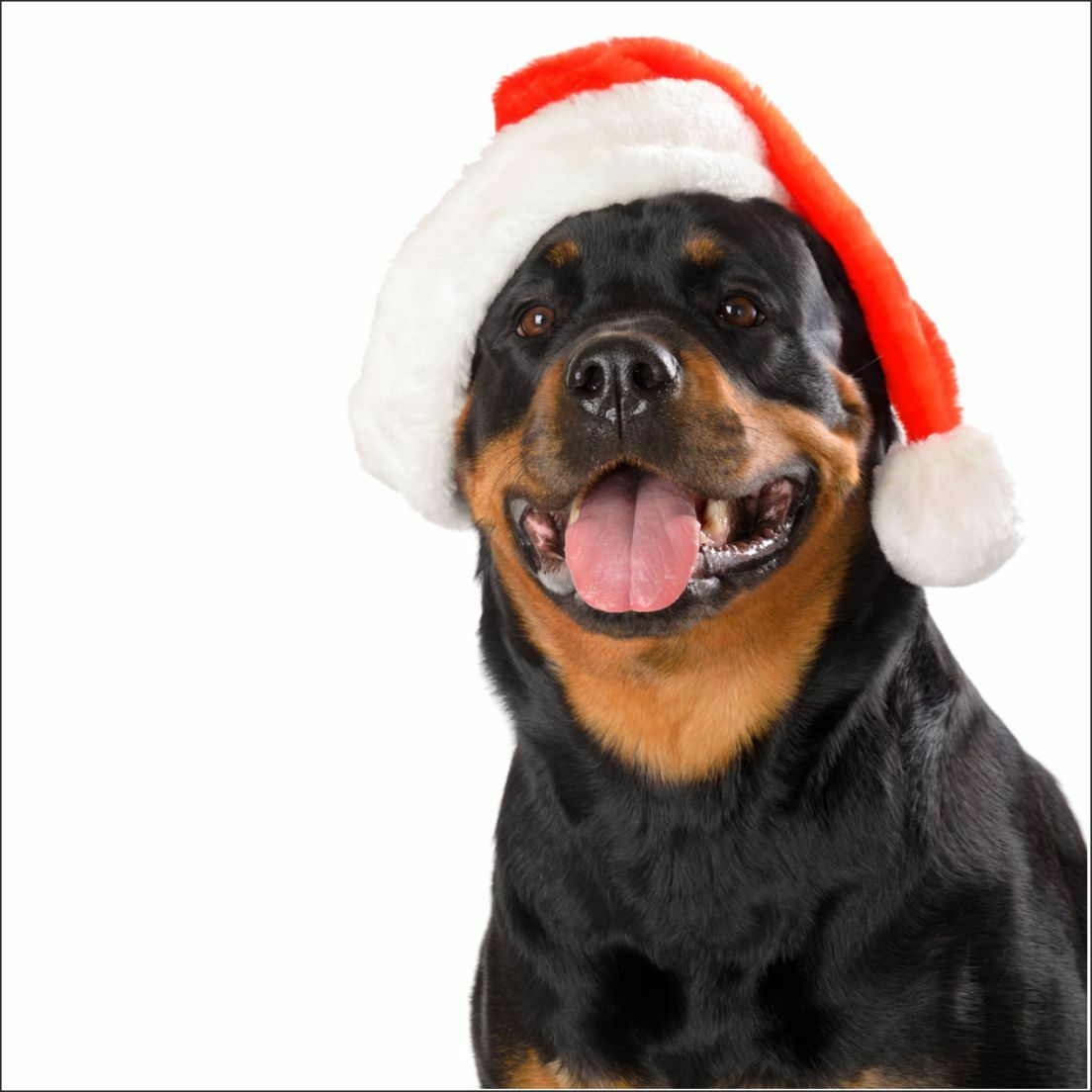 ROTTWEILER CHRISTMAS CARD new dog cards puppies dogs mum dad puppy ...