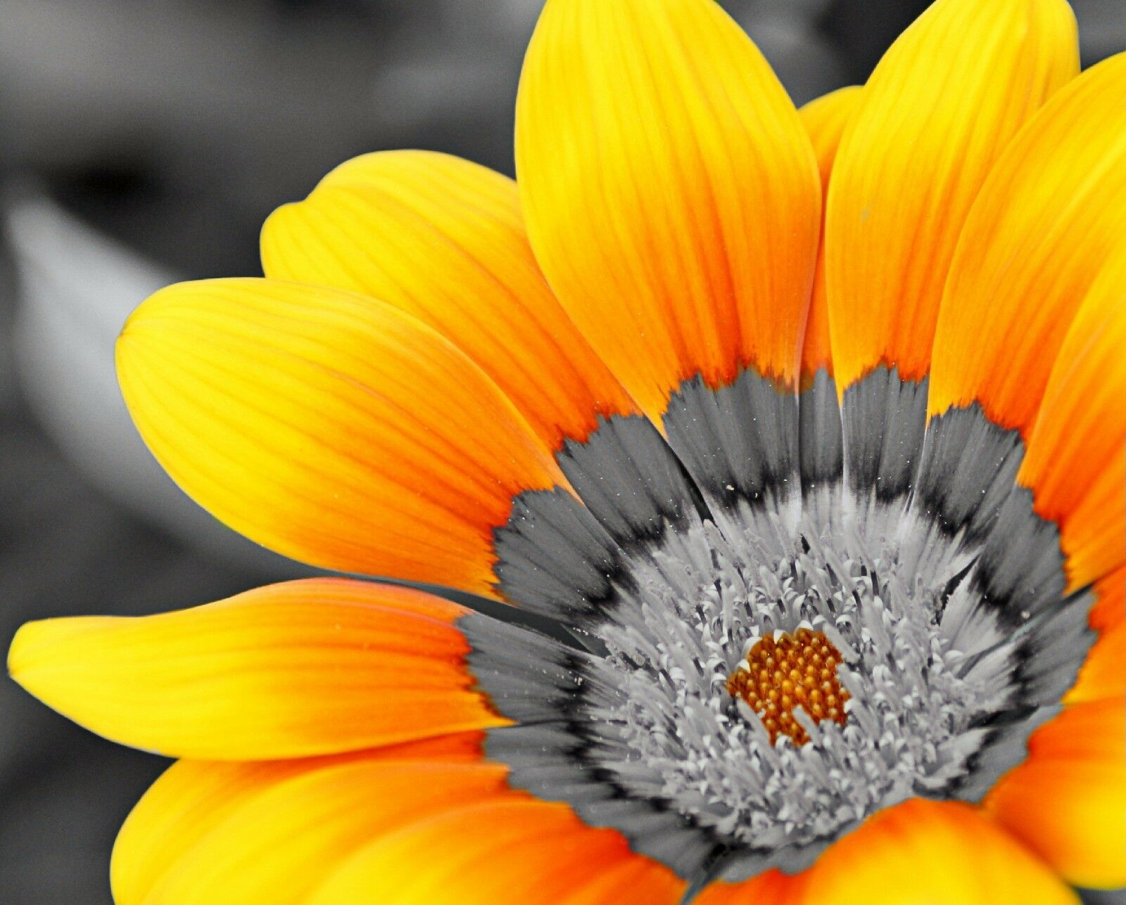 YELLOW GRAY ART Photo Print Bright Flower Wall Home Decor Floral ...