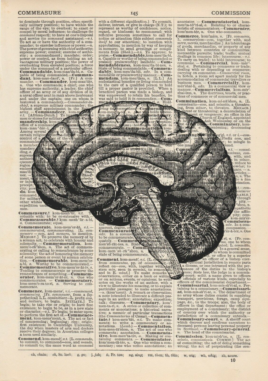Anatomical Brain Dissection Dictionary Art Print Medical Gross