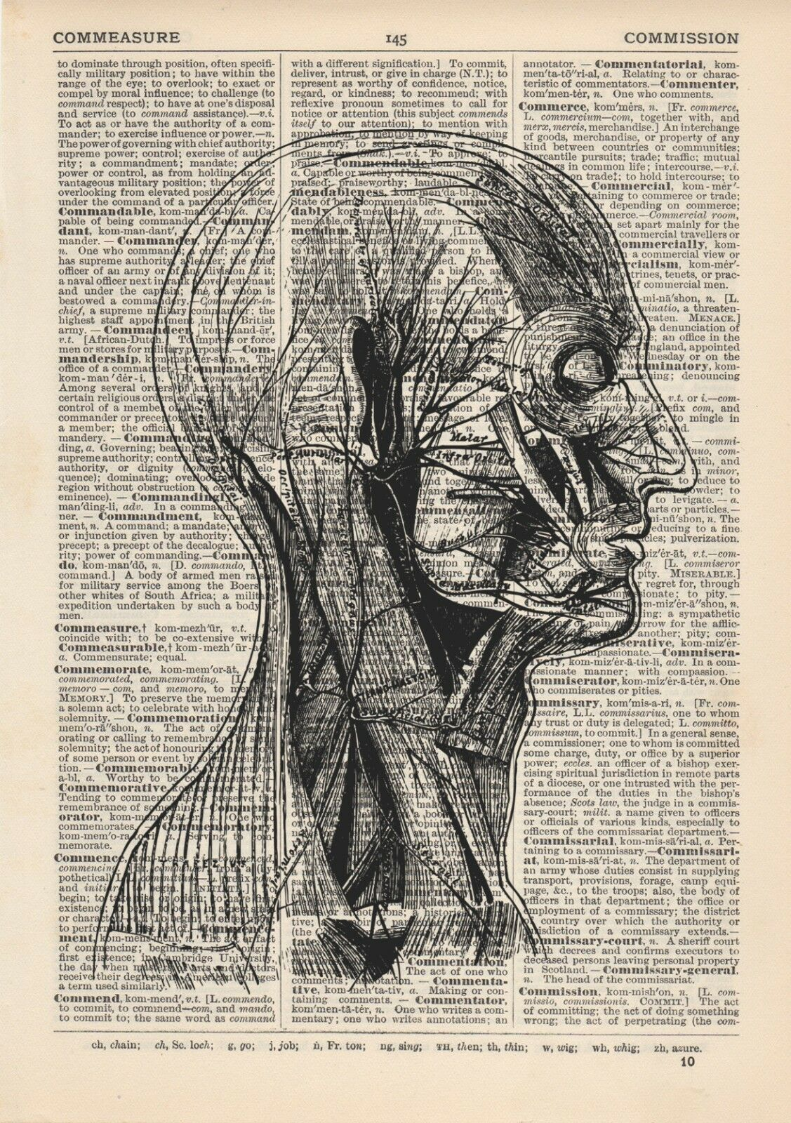 ANATOMICAL SD FACE Muscle Structure Dictionary Art Print,Medical ...