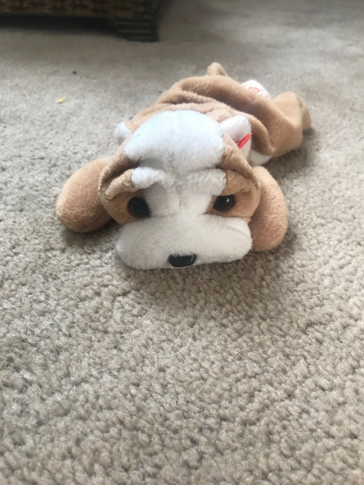 WRINKLES the Bulldog - TY Beanie Baby No Hang Tag 1 of 7FREE Shipping See  More 3feeaa7c765a