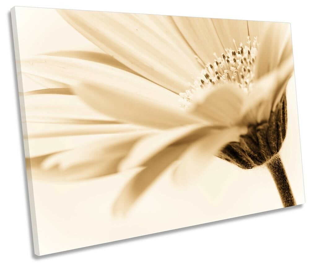 FLORAL FLOWER CREAM Sepia Picture SINGLE CANVAS WALL ART Print ...