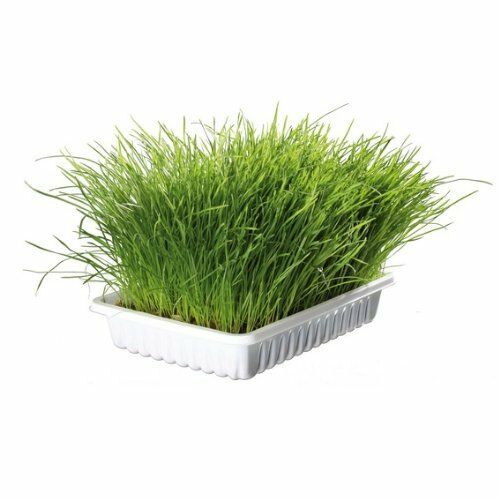 Trixie Bag Of Cat Grass Seeds - Approx. 100 G/Bag (Grow Your Own)4233