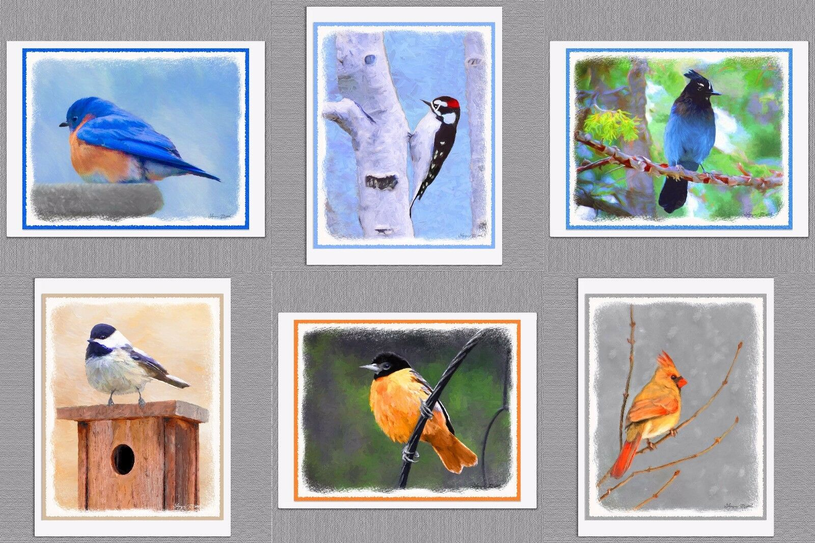 6 assorted wild bird blank note greeting cards bluebird oriole 6 assorted wild bird blank note greeting cards bluebird oriole cardinal junco 6 assorted wild bird blank note greeting cards bluebird oriole cardinal junco m4hsunfo