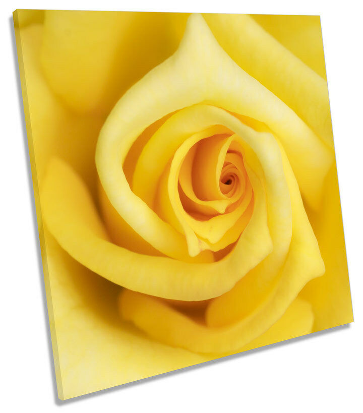 YELLOW ROSE FLOWER Floral CANVAS WALL ART SQUARE Picture Print ...