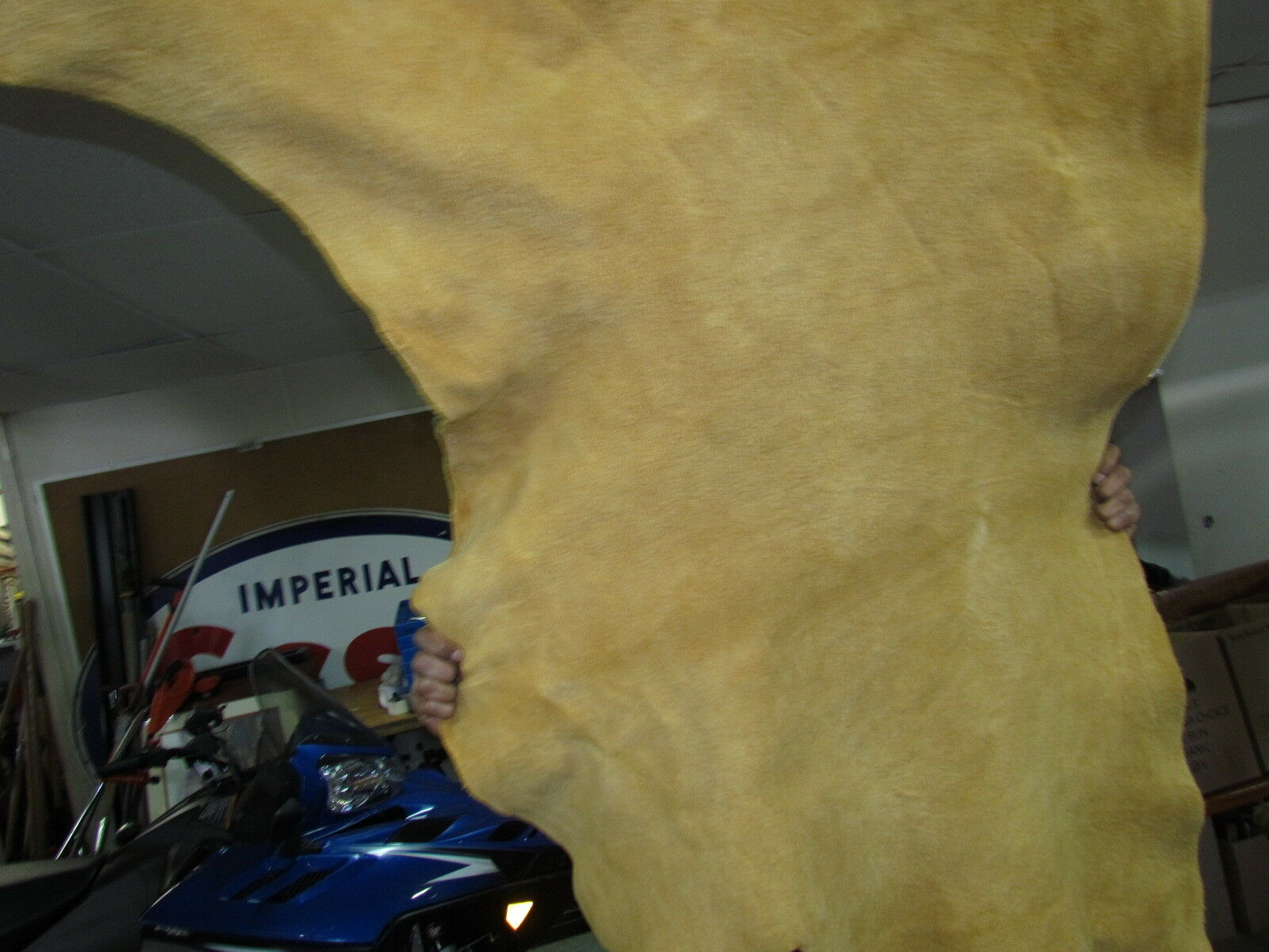 """Home Tanned Moose Hide 63""""x 42"""" Native , Excellect Sweing Material, Medium Soft"""