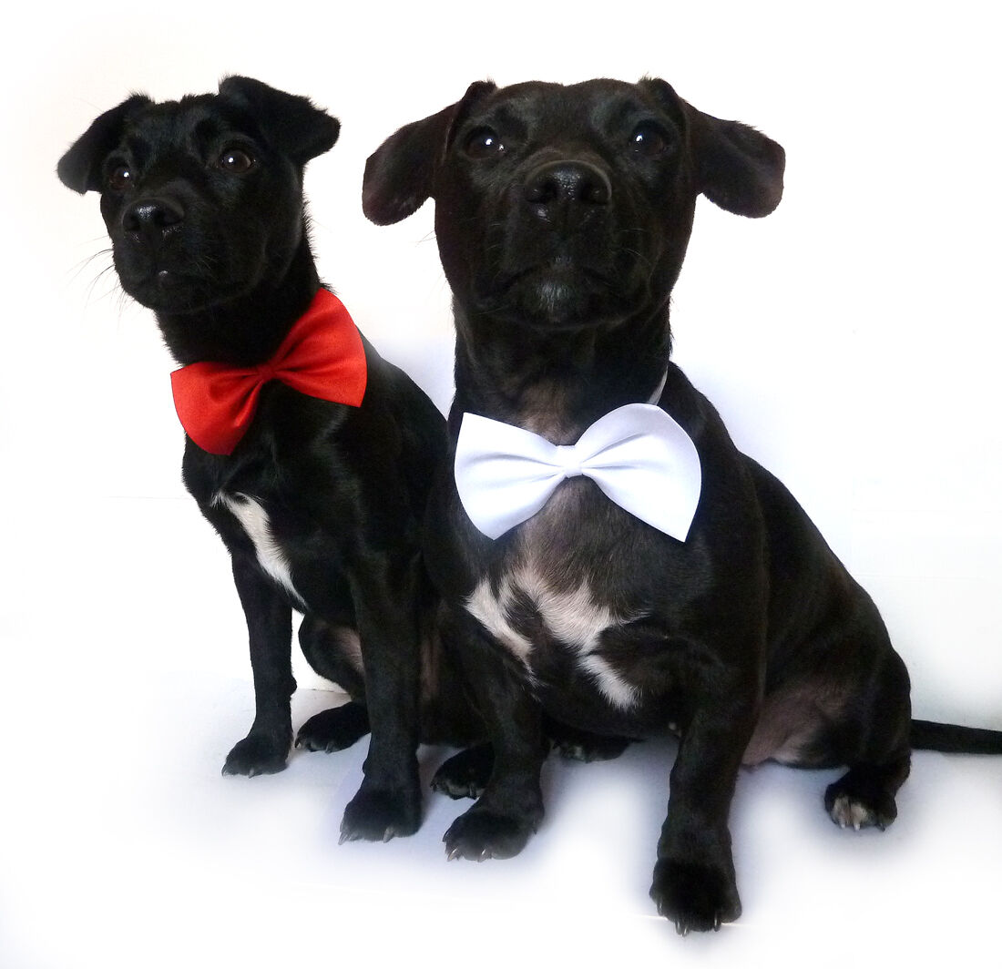 dog bow tie collar & cat bow tie collar adjustable sz 3 colours high quality UK