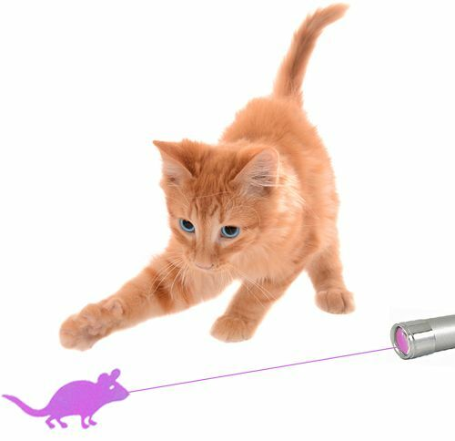 CatPlay The Ultimate Cat Laser Toy With Bright Mouse Animation For Endless Fun!