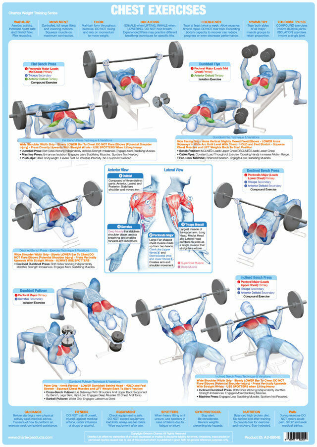 Chest Weight Training Poster Body Building Chart Pectorals Muscles