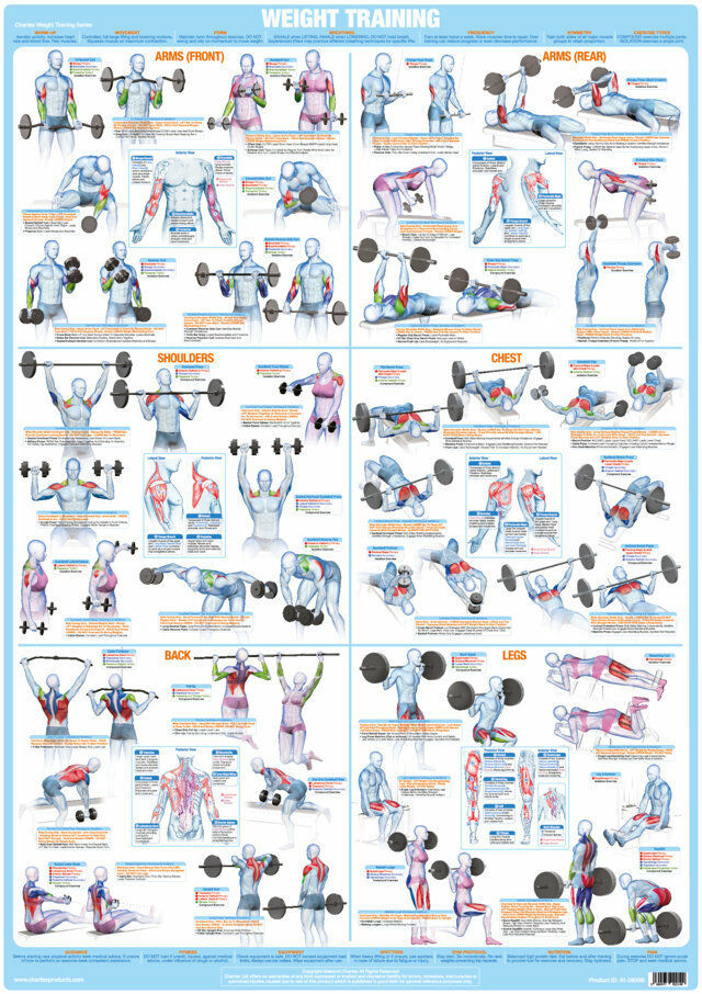 Body Building Poster Weight Training Exercise Chart Weight Lifting
