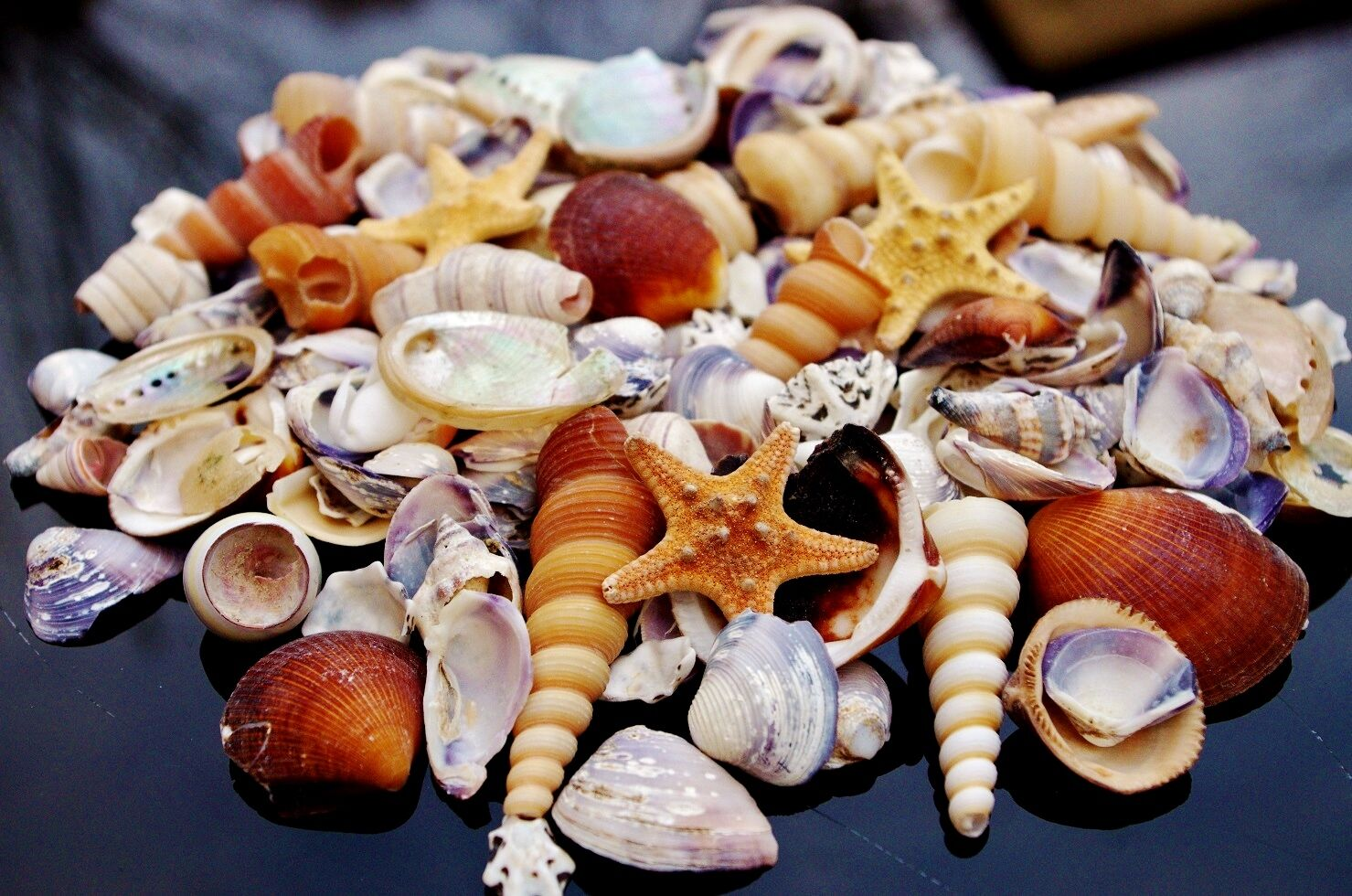 Crushed SeaShells and Starfish Beach Mixed Sea Shells 300g Bag