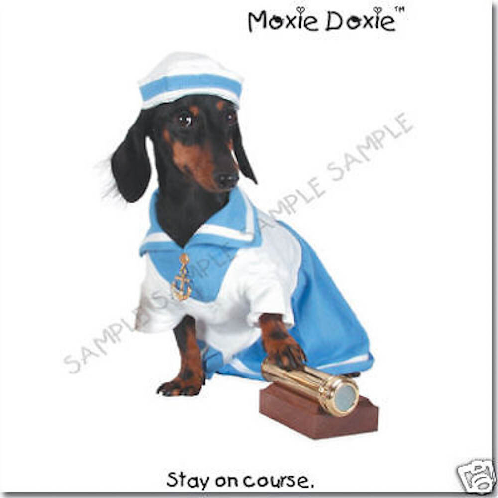 Moxie doxie very unique dachshund greeting cards set 4 998 moxie doxie very unique dachshund greeting cards set 4 m4hsunfo