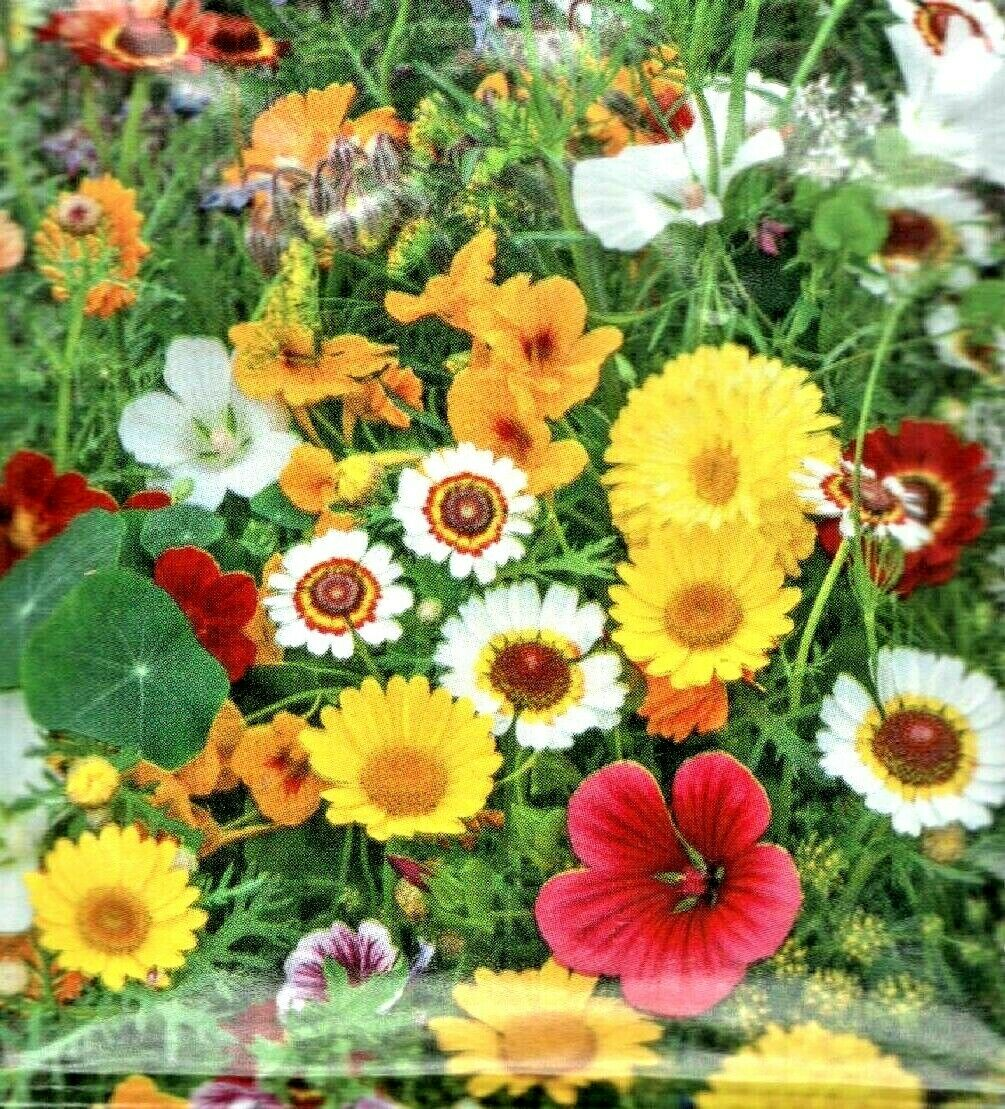 Edible Flowers Mixed Great For Salads 5 G Flower Seeds Buzzy
