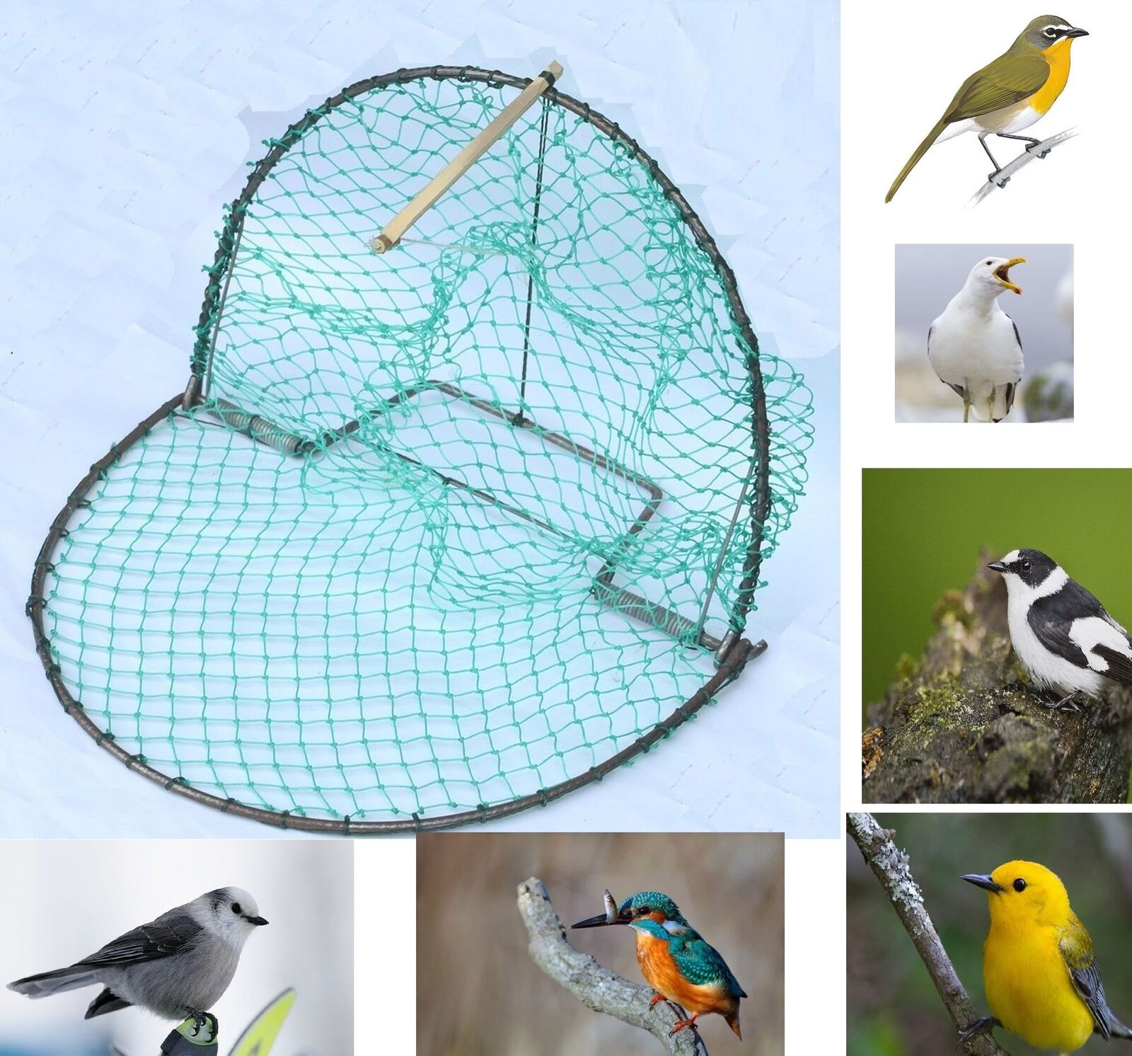 40CM BIRD PIGEON and Quail Humane Live Trap Hunting 16 Inch Trapping ...
