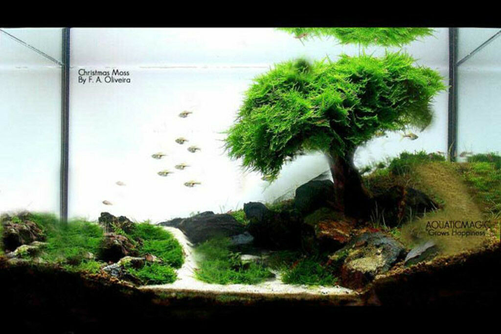 Christmas moss aquarium moss wall free ship inv 4 for Planted tank fish
