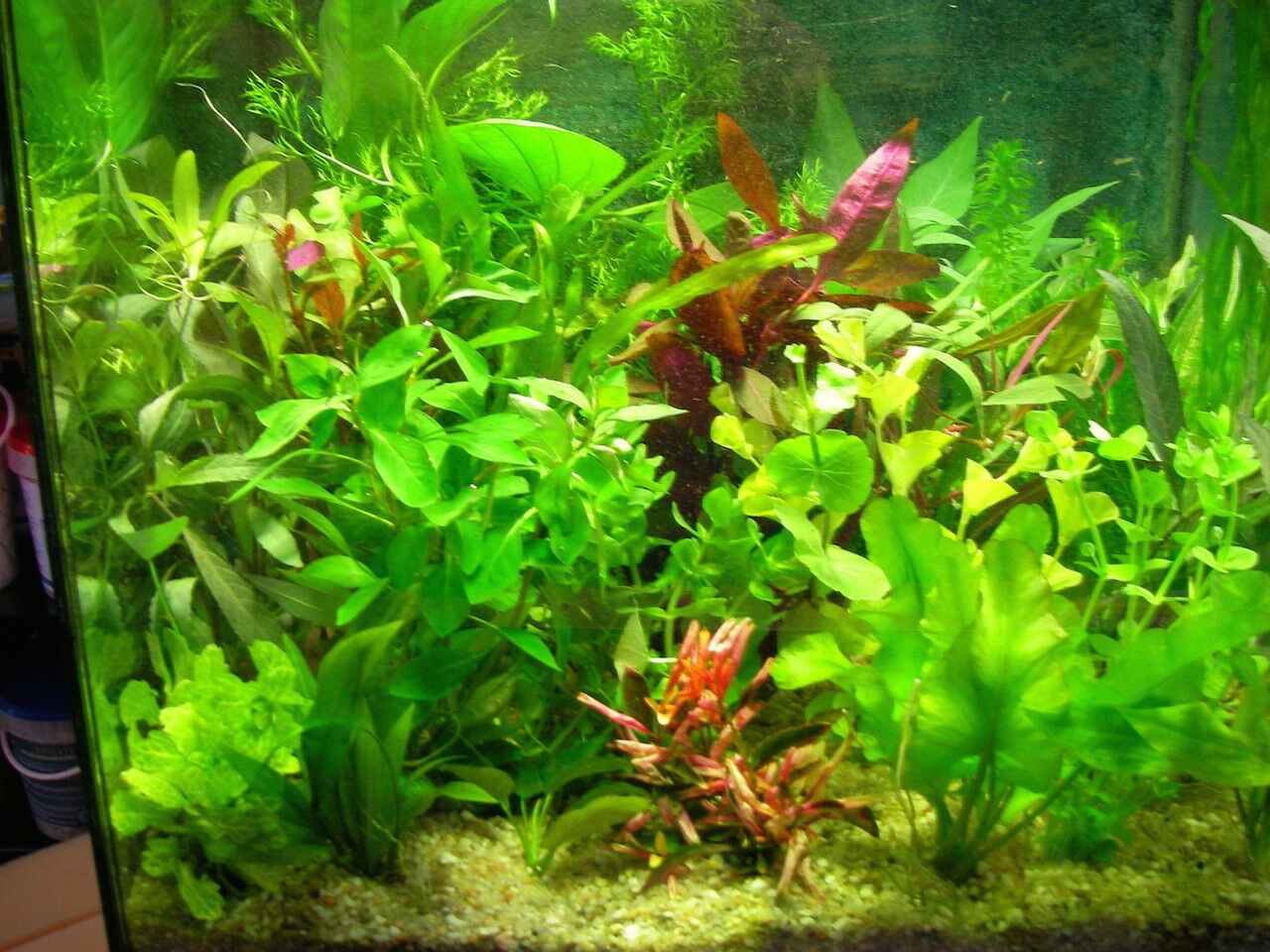 lot de 35 touffes de  plante  aquarium