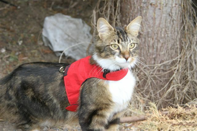 Mynwood Cat Walking Jacket Harness Vest Holster