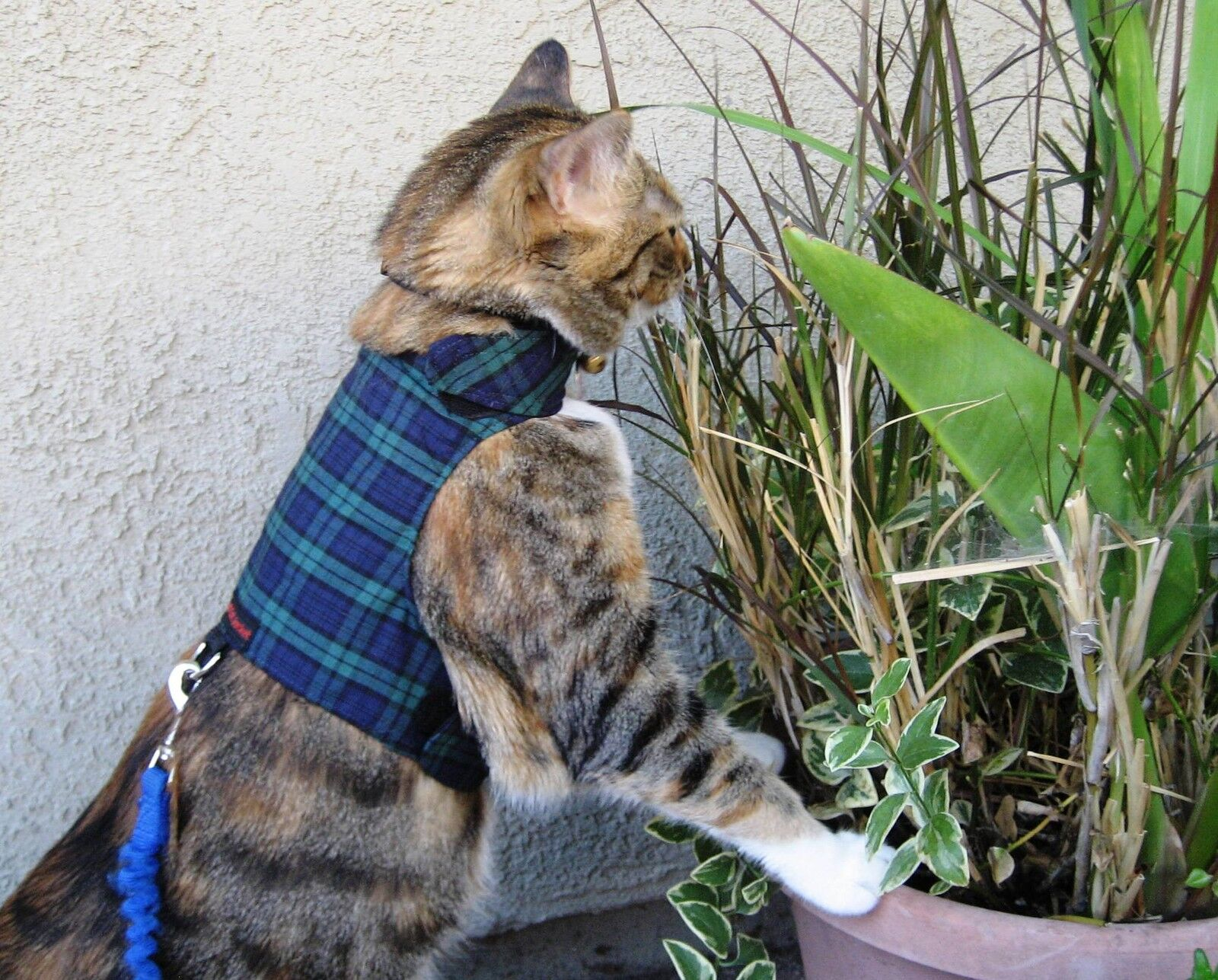 Cat Walking Harness Australia