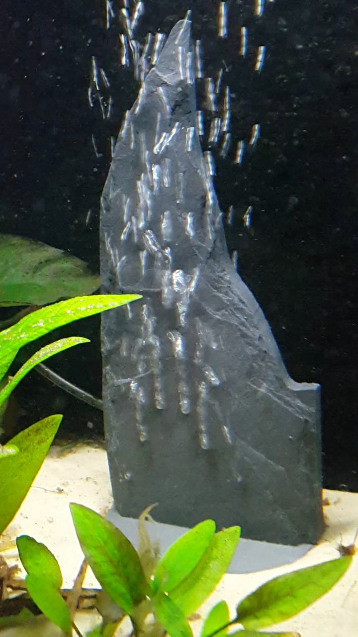 Fennstones natural slate air bubble formation ornament fish tank size choice