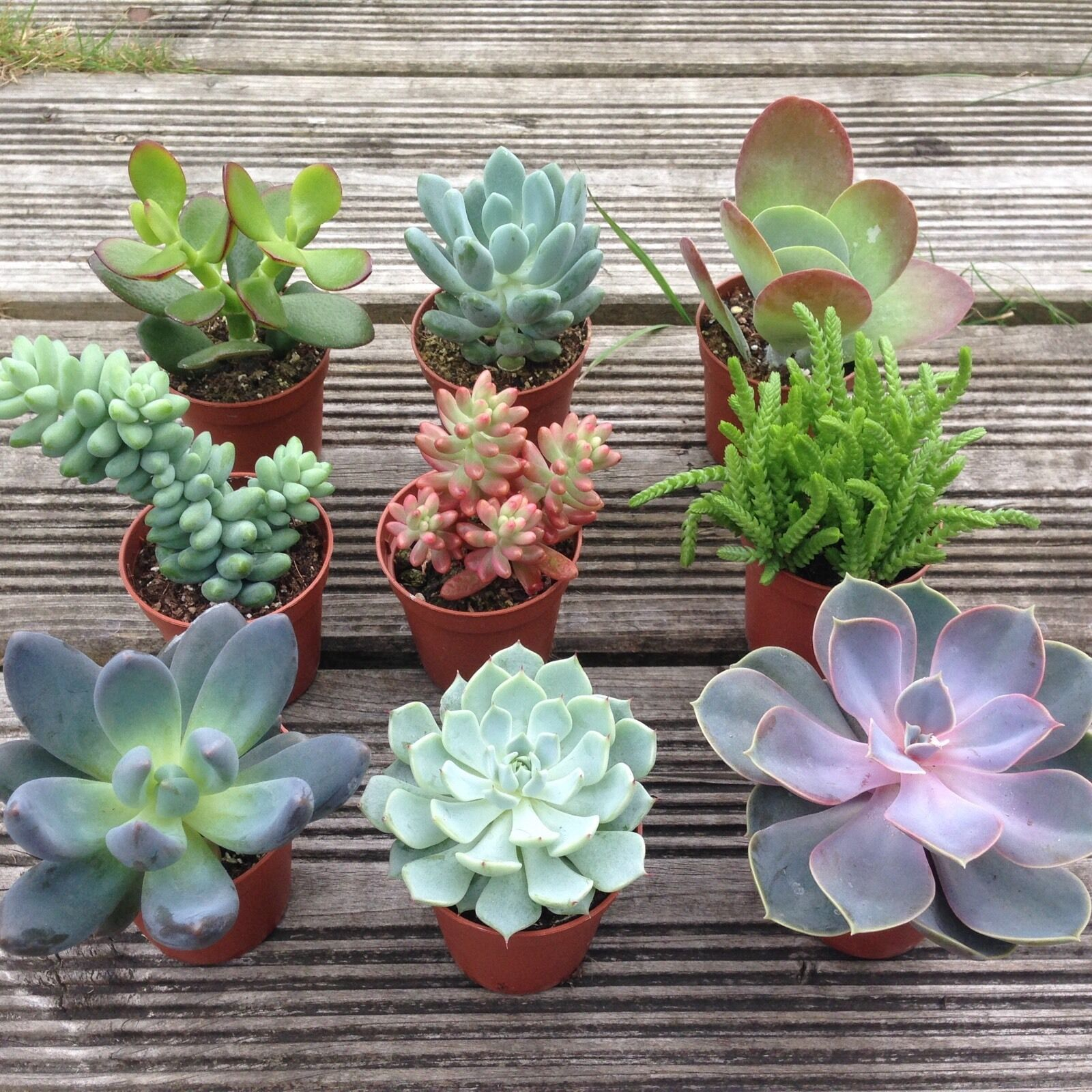 set of 3 mixed succulent plants in pots house