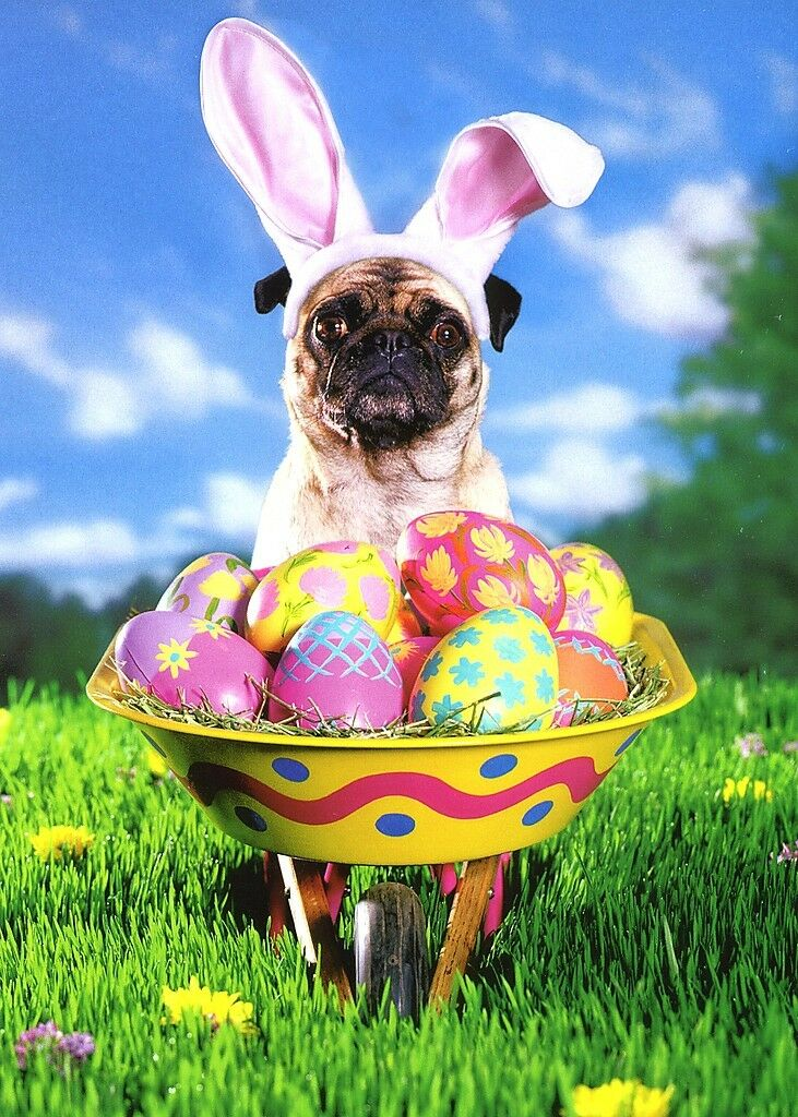 PUG WITH EASTER Wheelbarrow Funny Easter Card - Greeting Card by ...