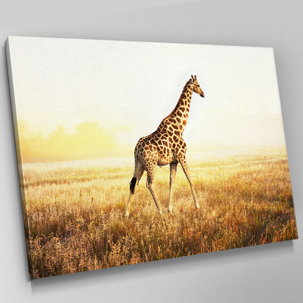 A531 AFRICAN Reticulated giraffe Canvas Wall Art Animal Picture ...