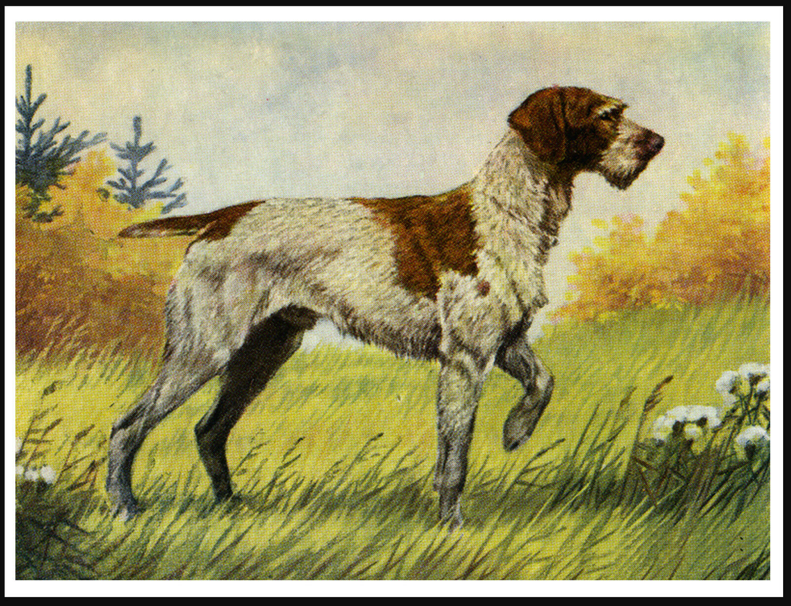 GERMAN WIREHAIRED POINTER Standing Dog Lovely Vintage Style Dog ...