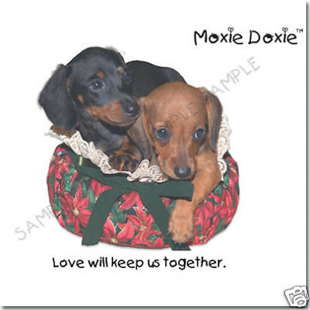 Moxie Doxie Very Unique Dachshund Greeting Cards Set 2 999