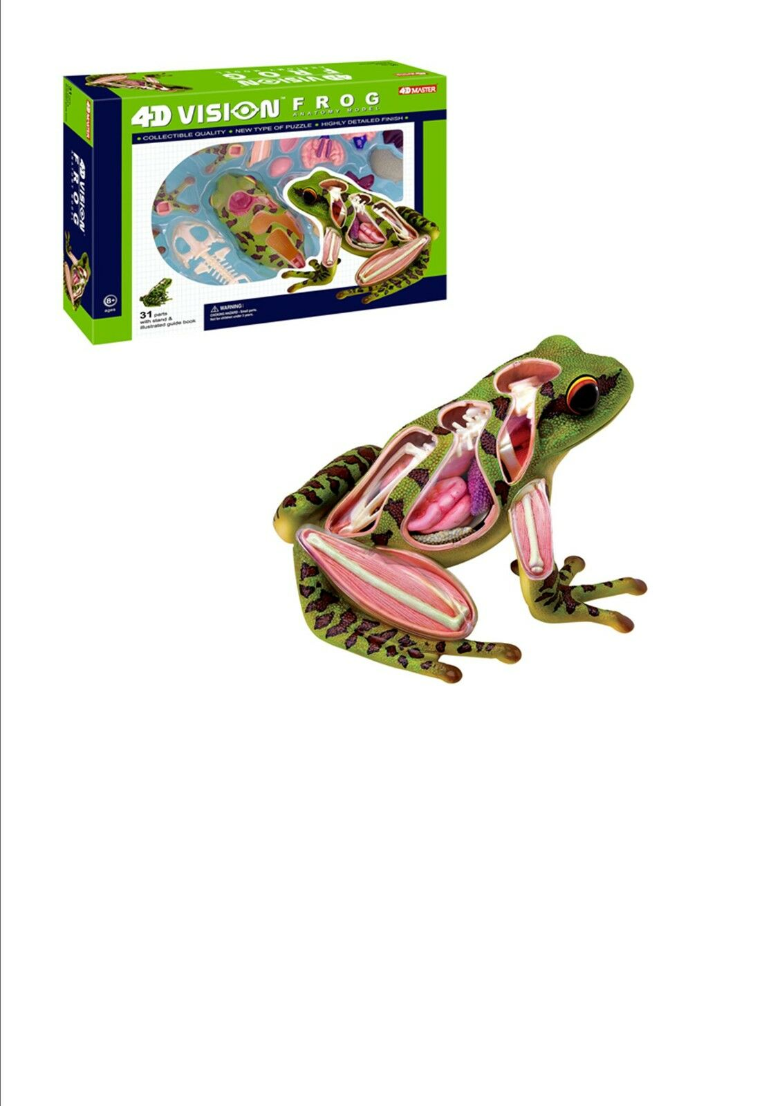 FROG ANATOMY MODEL/PUZZLE, 4D Vision Kit #26104 TEDCO SCIENCE TOYS ...