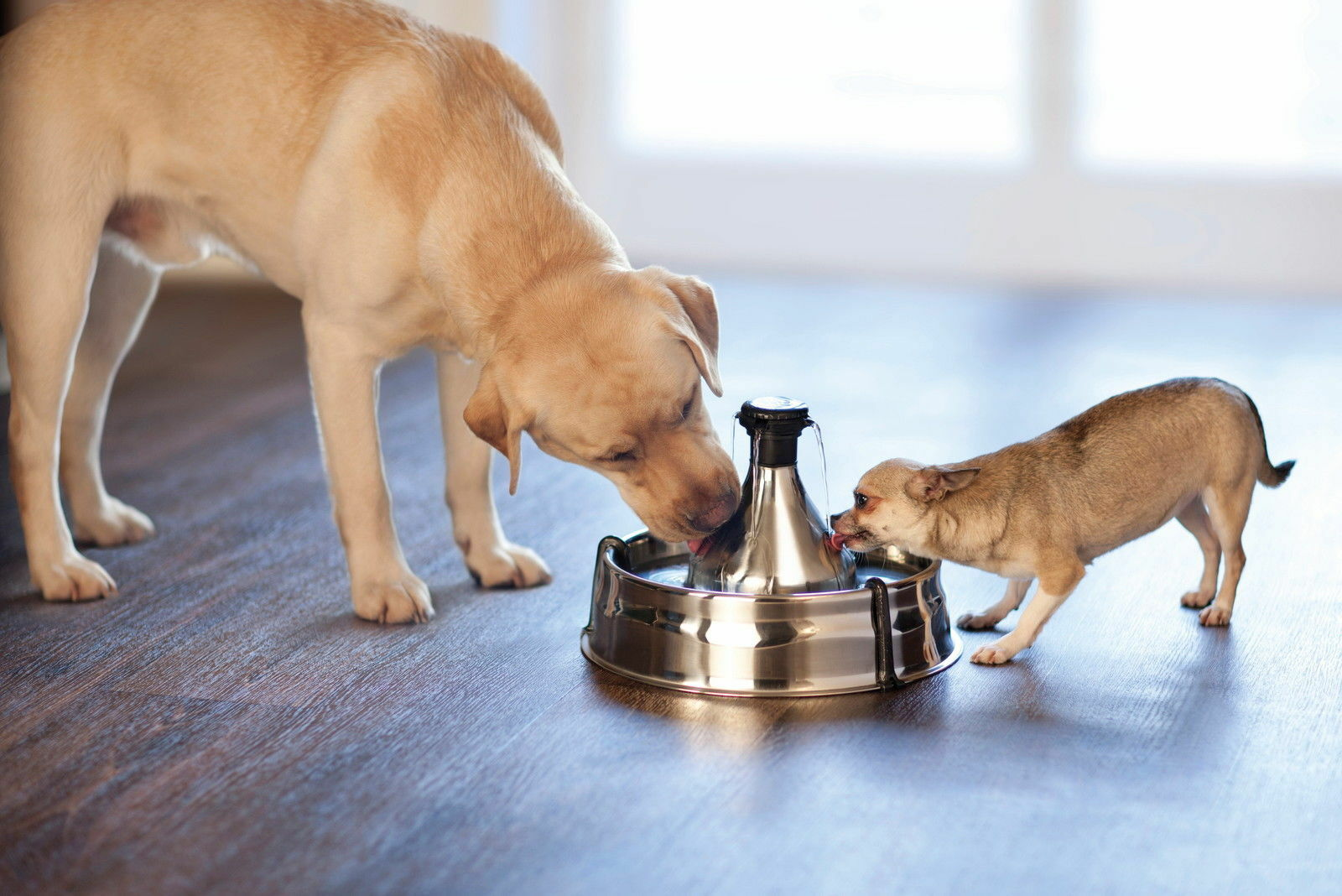 Drinkwell Stainless Steel Avalon Cat and Small Dog Water Fountain or Filters 360