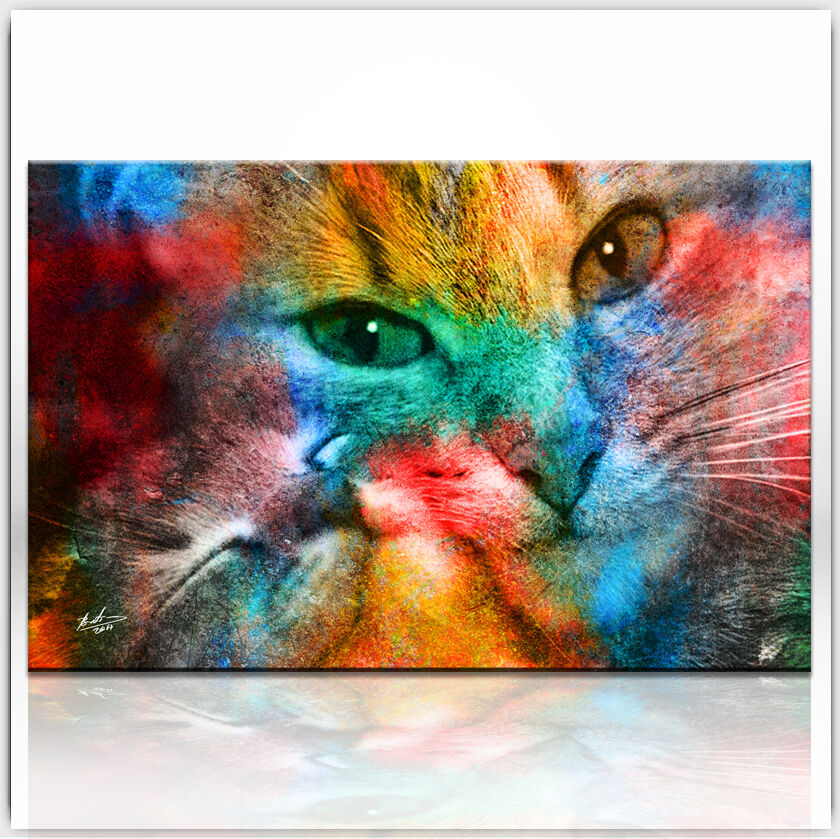 katze hauskatze tiere bild auf leinwand bunt abstrakt kunst wandbild xxl 332a eur 59 95. Black Bedroom Furniture Sets. Home Design Ideas