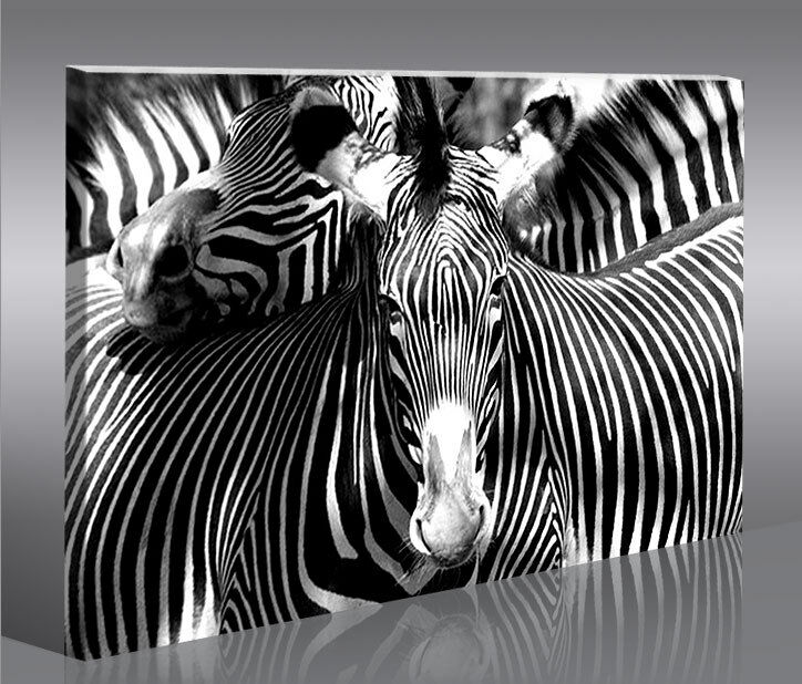 zebra zebras 1p bild bilder tierbilder auf leinwand wandbild poster eur 31 41 picclick de. Black Bedroom Furniture Sets. Home Design Ideas