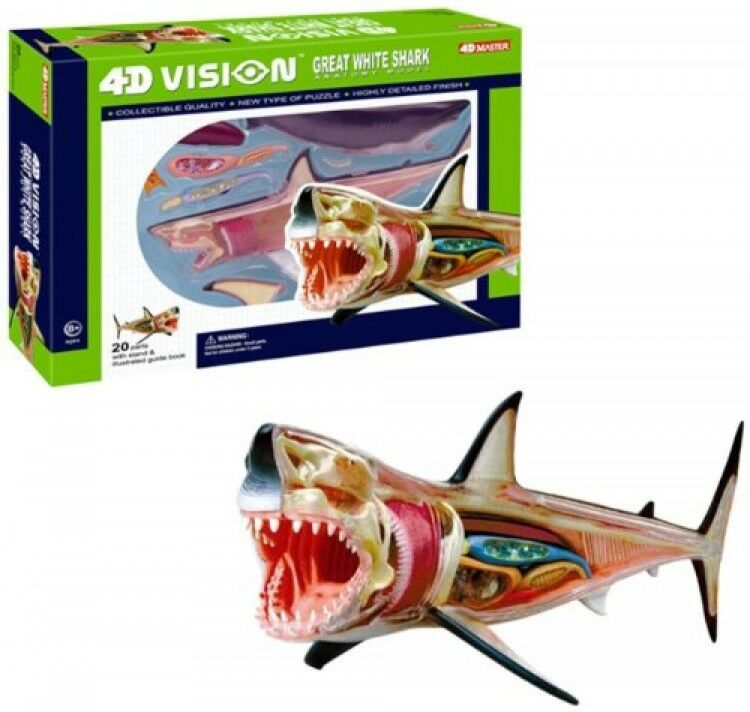 4D VISION GREAT White Shark Anatomy Model, New, Free Shipping ...