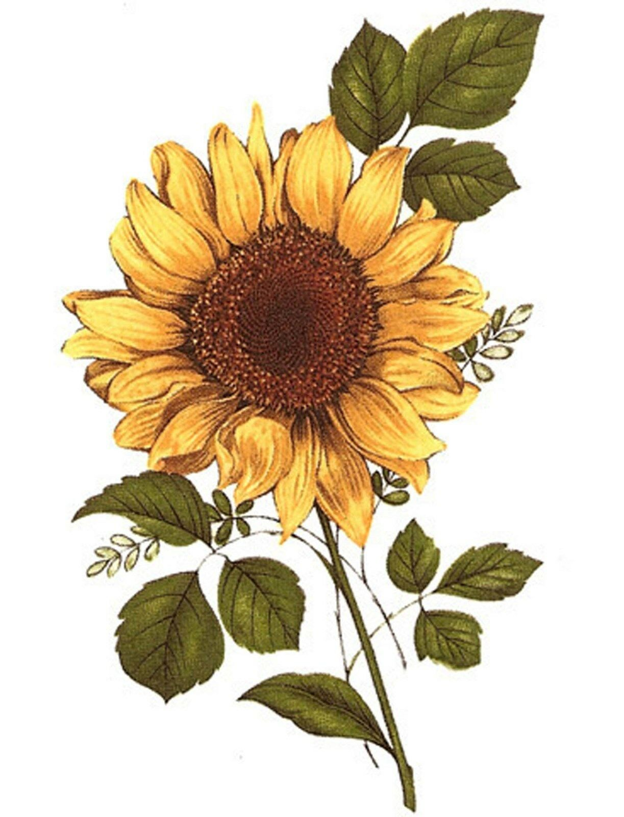 Yellow Sunflower Brown Center Flower Select A Size Waterslide