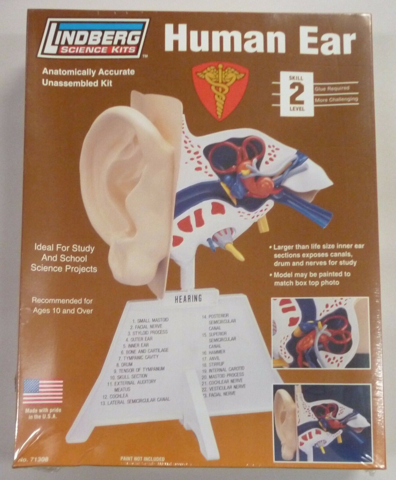 Lindberg 7 14 Inch Human Ear Anatomy Model Kit 1799 Picclick