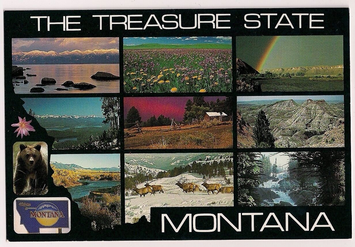 The Treasure State State Flower Grizzly Bear Mountains MT Montana Postcard •