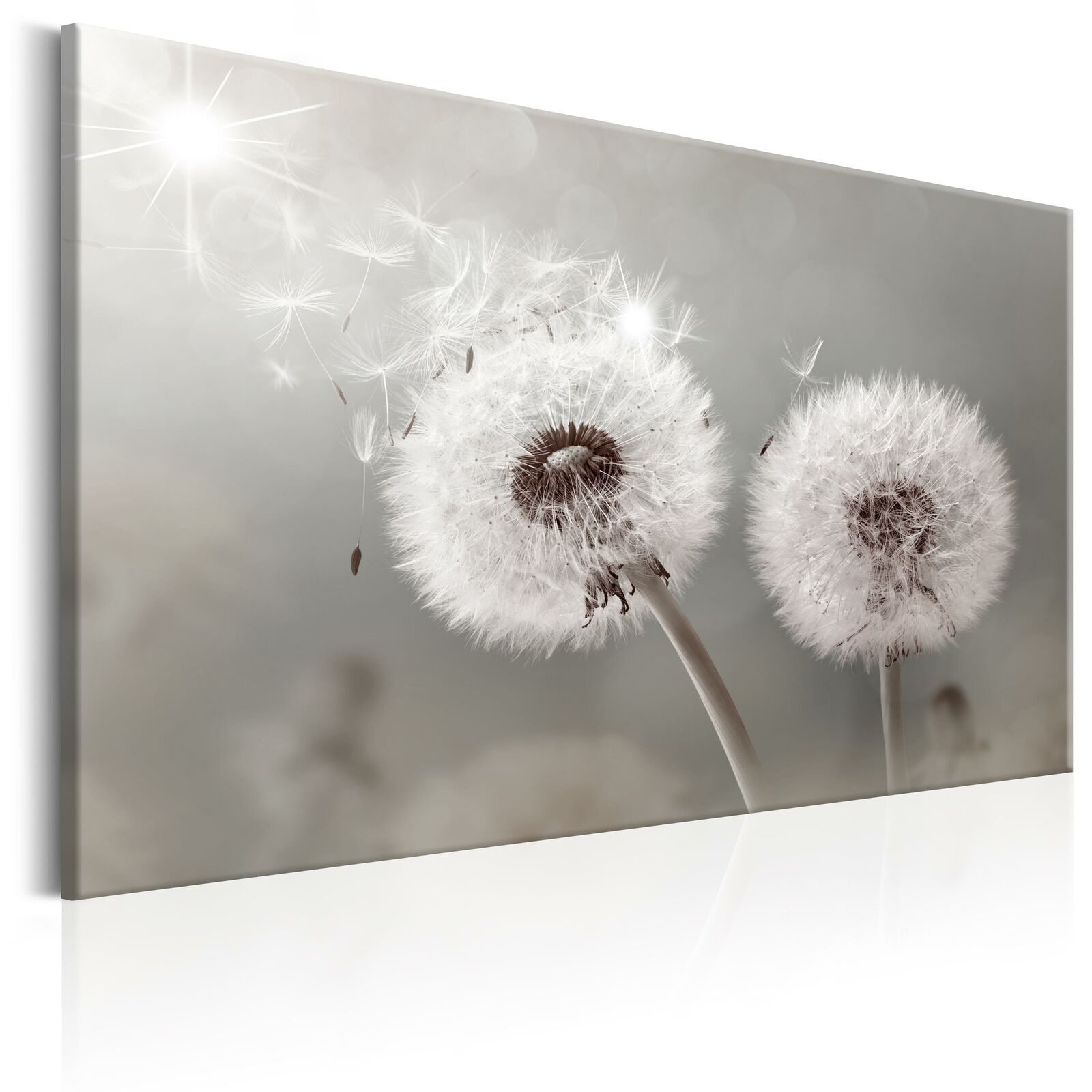 wandbilder pusteblume leinwand bilder xxl natur kunstdruck grau b c 0177 b a eur 22 99. Black Bedroom Furniture Sets. Home Design Ideas