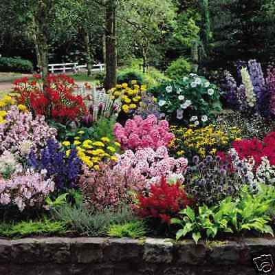 COTTAGE GARDEN MIX 150+ seeds colourful flower EASY TO GROW scatter bare patch