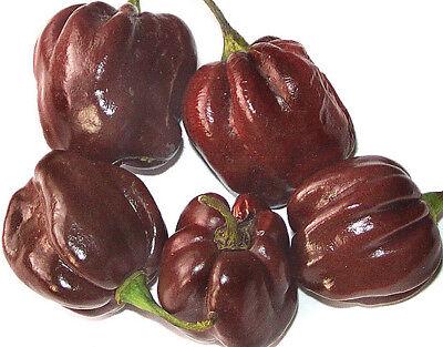PIMIENTO HABANERO CHOCOLATE  pepper  100 Semillas seeds