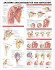 Anatomy and Injuries of the Shoulder Anatomical Chart by Anatomical Chart Co. (Fold-out book or chart, 2001)