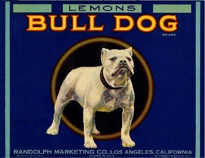 Los Angeles English Bulldog Dog Lemon Citrus Fruit Crate Label Art Print