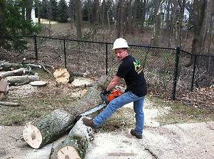 Get into tree removal business?