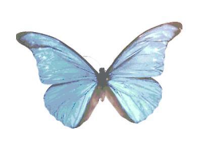 Amazing Blue Butterfly #2 Handmade Cross-Stitch Pattern Chart by Bella Stitchery