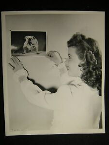 40s-Candid-Shirley-Temple-Bulldog-VINTAGE-PHOTO-562P