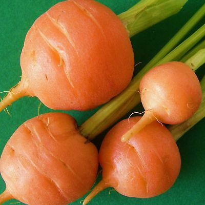 CARROT - PARIS MARKET - 10000 Seeds [..little round roots, quick & easy to grow]