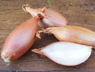 VEGETABLE  SHALLOT ZEBRUNE  400 FINEST SEEDS