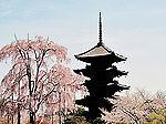 Fuji Happy Japan